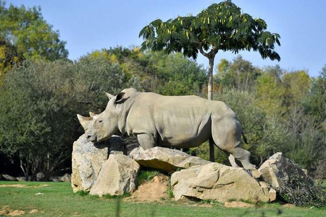 Murió a los 55 años la decana de los rinocerontes blancos en cautividad — 180.com.uy | Del Sol 99.5 en el la Copa América 2019