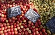 Portal 180 - Este verano fue el de mayor oferta de frutas y hortalizas de los últimos seis años
