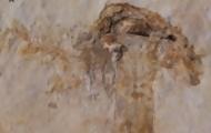 Portal 180 - Hallan el hongo más antiguo, que compartió la Tierra con los dinosaurios
