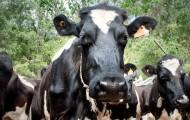 Portal 180 - Brasil anuncia que suspende la importación de leche uruguaya