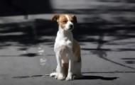 Portal 180 - Veterinarios debaten la sobrepoblación de perros y posible eutanasia