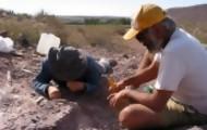 Portal 180 - Hallan en Argentina restos de una nueva especie de dinosaurio saurópodo