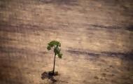 Portal 180 - Amazonia: en siete meses se deforestó más que en todo el año pasado