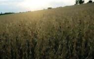 Portal 180 - Agroquímicos: en Guichón piden control de aguas por alarma en la población