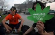 """Portal 180 - Marihuana, entre la """"teoría de la escalera"""" y """"la teta"""" de la mamá"""