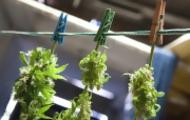 Portal 180 - Especialistas no recomiendan la marihuana en cuidados paliativos