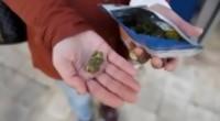 Portal 180 - Investigan consumo de brownies con marihuana en la Dinama durante partido de Uruguay