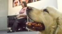 Portal 180 - Florencia jubila a su perra guía, Salu