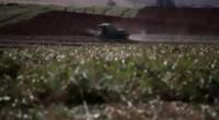 Portal 180 - Avispas como alternativa al insecticida en la soja no transgénica