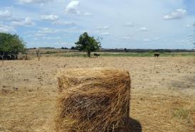 Portal 180 - Suman otros siete departamentos a autorización de pastoreo en rutas y caminos