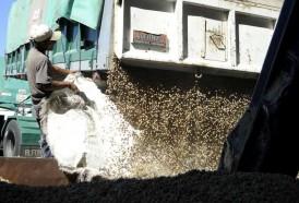 Portal 180 - Cultivos de verano: maíz tiene zafra récord y la soja el segundo registro de la historia