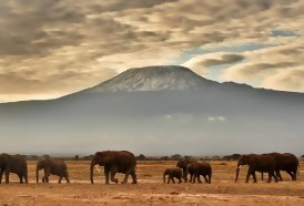 Portal 180 - El estado preocupante de la biodiversidad en cifras
