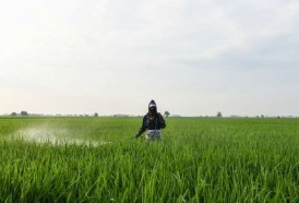 Portal 180 - Uruguayos se capacitan para mejorar el control de plaguicidas