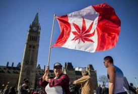 Portal 180 - Parlamento canadiense aprueba proyecto de legalización de la marihuana