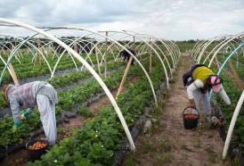 Portal 180 - Empresarios rurales se retiran de los Consejos de Salarios