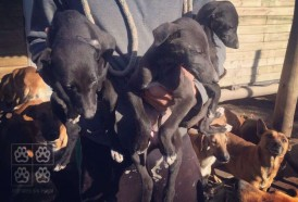 Portal 180 - Animales Sin Hogar realizará una jornada de adopción este sábado