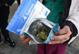 Portal 180 - Farmacias vendieron más de 1.200 kilos de marihuana desde julio de 2017