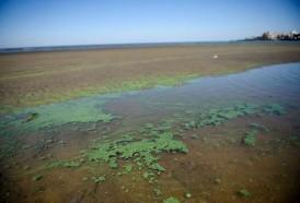 Portal 180 - Cómo y cuándo informa la Intendencia sobre las cianobacterias