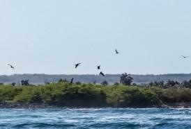 Portal 180 - Casi 1.600 especies han sido introducidas en el frágil ecosistema de Galápagos