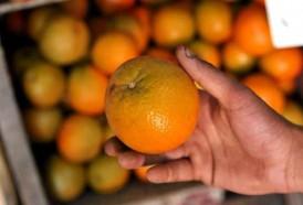 Portal 180 - Precios de frutas y verduras por debajo del promedio histórico
