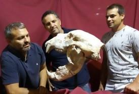 Portal 180 - Hallan fósiles de un oso gigante que vivió hace 700 mil años en Argentina