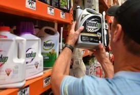 Portal 180 - Roundup, de Monsanto, nuevamente considerado cancerígeno por un jurado de EEUU