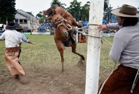 """Portal 180 - Animalistas reclaman prohibir """"espectáculo dantesco"""" de las jineteadas"""