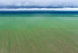 Portal 180 - Brasil en camino a ser el campeón mundial de la soja