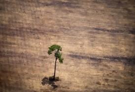 Portal 180 - Brasil concentró en 2019 la mayor pérdida de bosques inexplotados