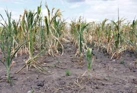 Portal 180 - FAO advierte de un estancamiento en la reducción del hambre en Latinoamérica
