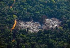 Portal 180 - Deforestación amazónica de Brasil bate récord desde 2008