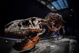 Portal 180 - Los T-Rex enanos probablemente no existieron