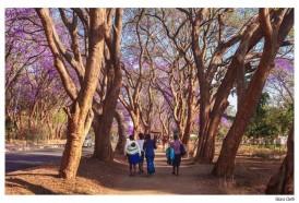 Portal 180 - De los 100 países en Montevideo a los jacarandá de Zimbabue