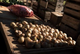 Portal 180 - Canasta frutihortícola 9% por debajo del promedio histórico