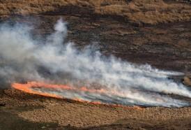 Portal 180 - La biodiversidad del Delta del Paraná, amenazada por incendios históricos