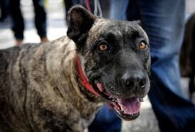 Portal 180 - Nueva reglamentación sobre tenencia de perros con multas de hasta 10.000 pesos