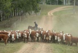 Portal 180 - Habilitan pastoreo en rutas y caminos por déficit hídrico