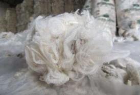 Portal 180 - Lana extrafina: del basalto uruguayo a tejidos exclusivos en Japón