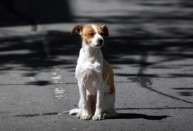 Portal 180 - Por un país sin animales abandonados