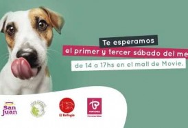 Portal 180 - Ok Pet se suma a las jornadas de adopciones