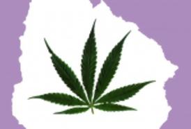 Portal 180 - La polémica desatada sobre la marihuana sería más estupidizante que el consumo de marihuana en sí