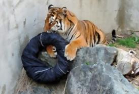 """Portal 180 - Leones, tigres y osos """"diseñadores"""""""