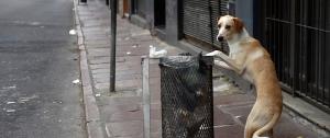 Portal 180 - Animalistas de Cotryba rechazan eutanasia en perros