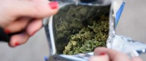 Portal 180 - Mercado ilegal de marihuana perdió más de 22 millones de dólares desde la regulación
