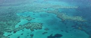 "Portal 180 - Pérdida ""catastrófica"" de corales en la Gran Barrera de Australia"