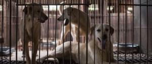 Portal 180 - Un fallo judicial prohibe matar perros para comer su carne en Corea del Sur