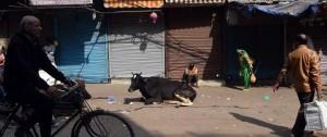 Portal 180 - Asesinan a un musulmán en el oeste de India por pasturar vacas