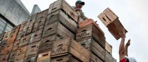 Portal 180 - Abundancia de oferta empuja a la baja los precios de frutas y verduras