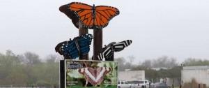 Portal 180 - Las mariposas, inesperadas víctimas del muro de Trump