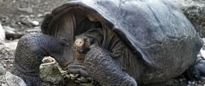 Portal 180 - Se abre un camino para salvar al último gigante encontrado en Galápagos